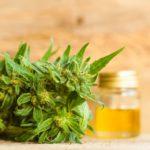 CBD Cannabidiol Cannabis