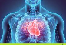 CBD Öl bei Herzproblemen